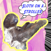 Sloth on a Stroller