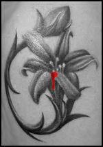 Die schwarze Lilie